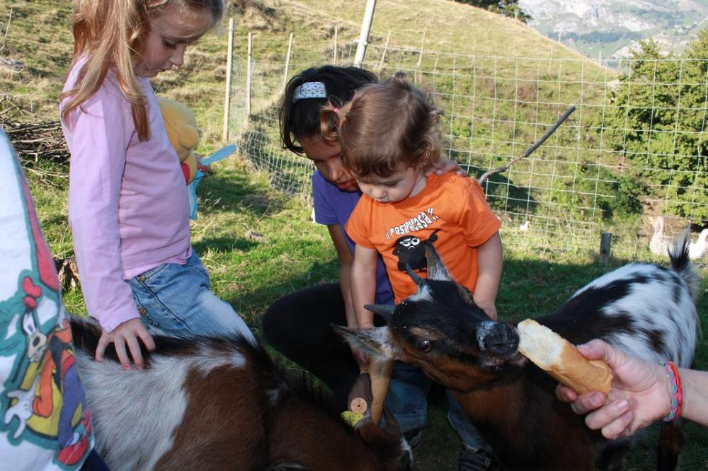 Dando de comer a las cabras enanas